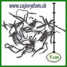 Ceylon Lumbini OP1