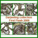 Darjeeling collection First Flush 2006